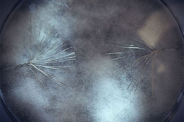 001_Myconnect_mycelium-photo-Sasa-Spacal